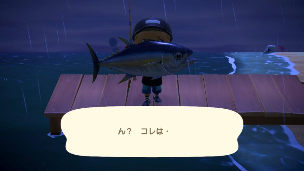 マグロ 釣り上げた時の写真。