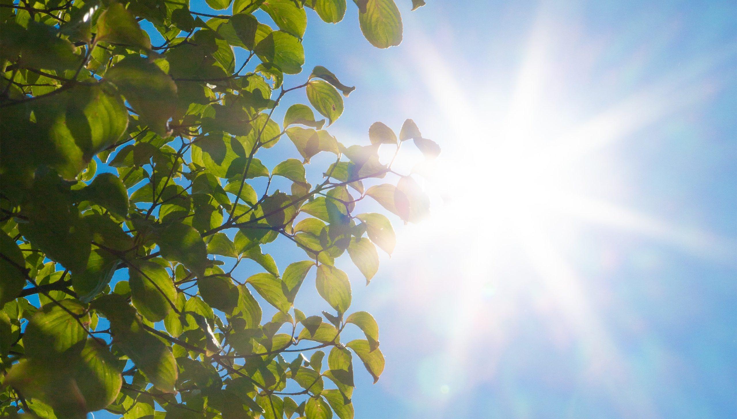 陽射し 熱中症対策