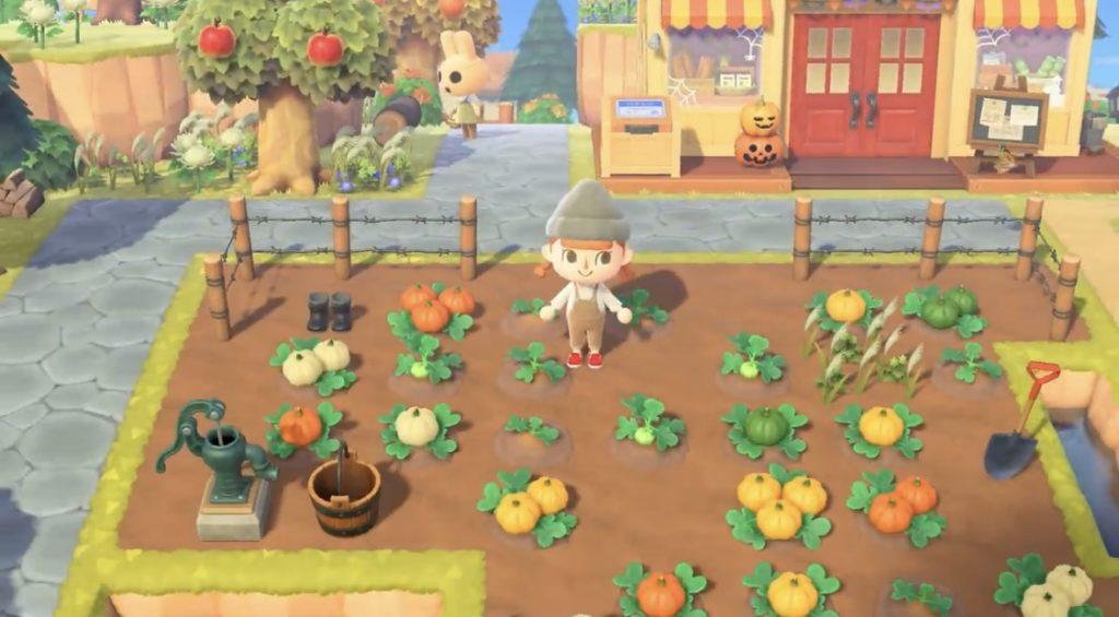 あつ森 かぼちゃの栽培